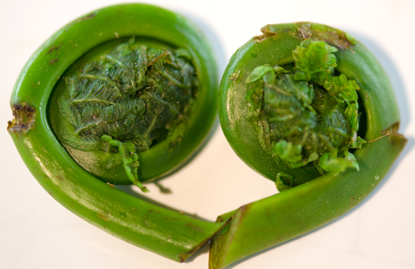 how to cook fiddleheads garlic