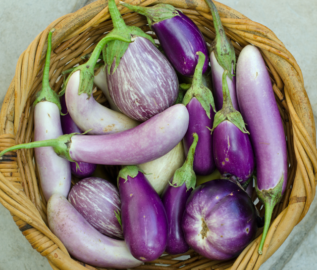 A recent harvest of all the varieties of eggplant we are growing.